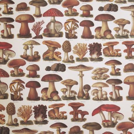Papier tassotti motifs champignons