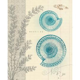 Carte d'art coquillage