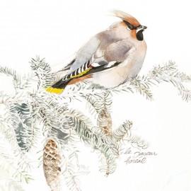 Carte Postale 14x14 cm oiseau Julie Wintz-Litty jaseur boréal