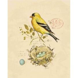 Carte d'art oiseau chanteur doré 2 Chad Barrett