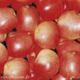 Feuilles décopatch pomme rouge