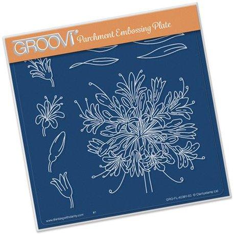 Gabarit tracage du parchemin fleurs d'agapanthe Groovi