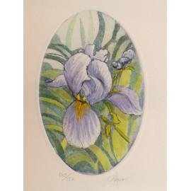 Gravure originale eau forte ovale iris bleu