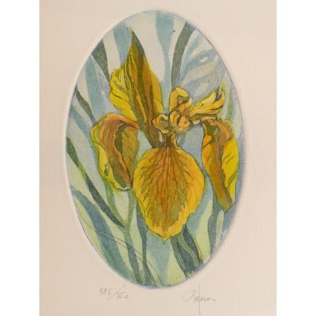 Gravure originale eau forte ovale iris jaune