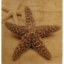 Carte postale étoile de mer