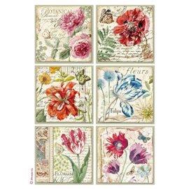 Papier de riz imprimé Stamperia A4 botanical