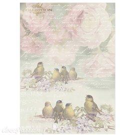 Papier scrapbooking sur papier calque A4 oiseaux