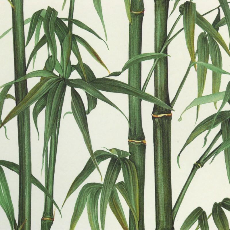 papier peint motif bambou papier peint feuilles large choix de produits d couvrir papier peint. Black Bedroom Furniture Sets. Home Design Ideas