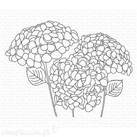 Tampon clear My Favorite Things Hydrangeas in Bloom