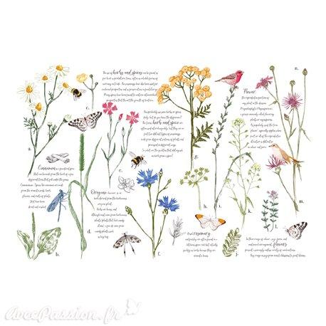 Décalcomanie Transfert pelliculable Herbs & Spices 88x57cm