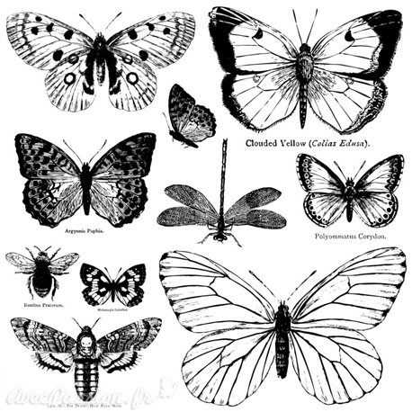 Tampons IOD Clear Stamps Butterflies 10 pièces