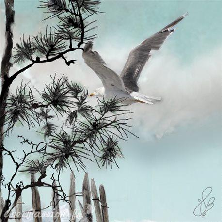 Carte d'art Valie Le Boeuf Le Goéland