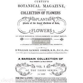 Transfert pelliculable Redesign Botanical Magazine 61x89cm