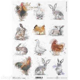 Papier de riz poules lapins oie A4