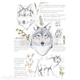 Transfert pelliculable Redesign Gray Wolf