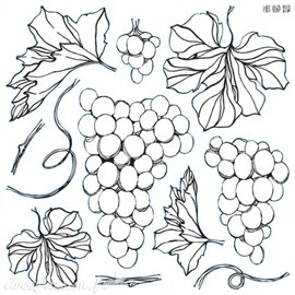 Tampons IOD Clear Stamps Grapes