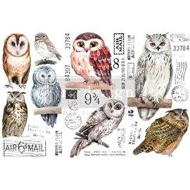 Transfert pelliculable Redesign Owl 15x30cm