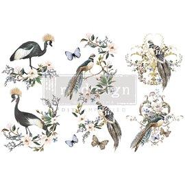 Transfert pelliculable Redesign Rare Birds 15x30cm