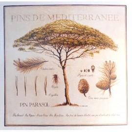 Carte d'art Pascal Cessou pins de méditérranée