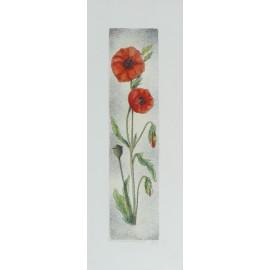Gravure eau forte fleurs coquelicots