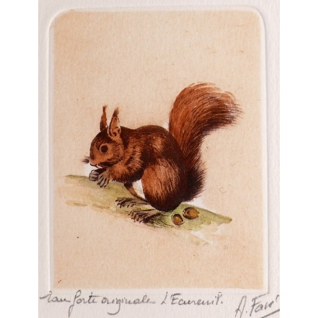 Gravure eau forte écureuil
