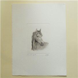 Gravure pointe sèche cheval noir et blanc