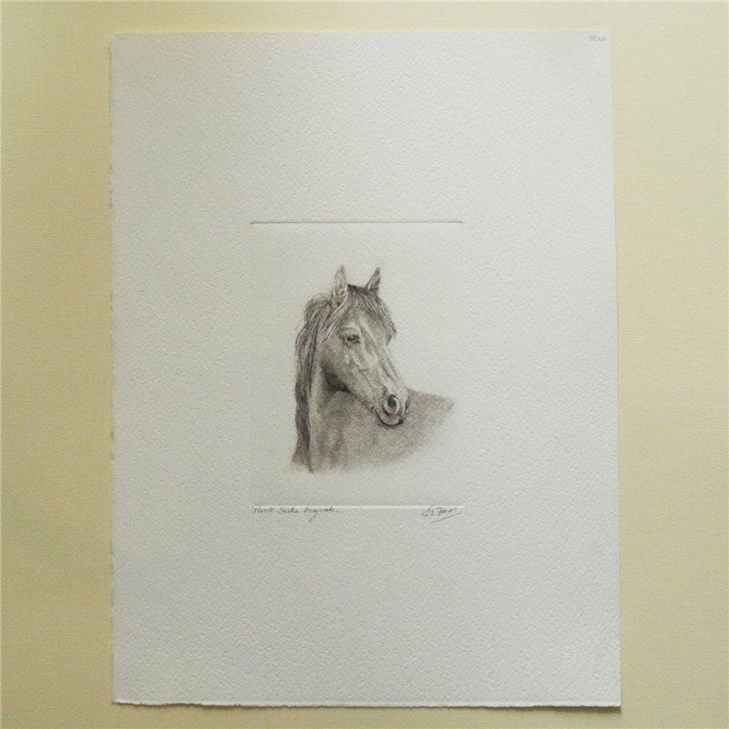 gravure pointe s che cheval noir blanc achat vente. Black Bedroom Furniture Sets. Home Design Ideas