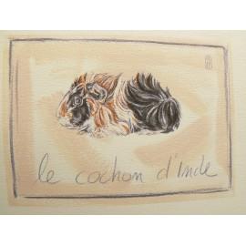 Carte d'art Foucher Poignant cochon d'inde