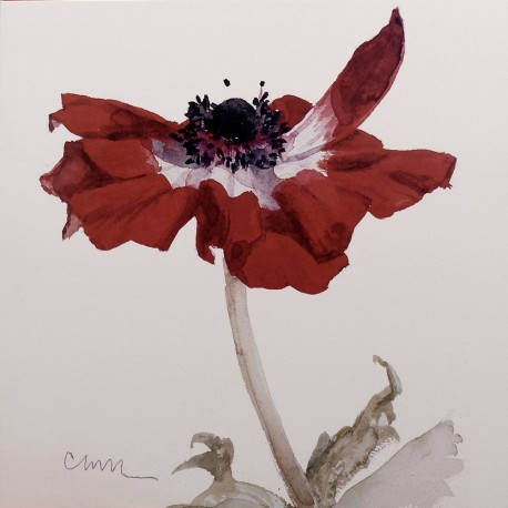 Carte postale fleurs Carol Matyia Ross Red Anemone