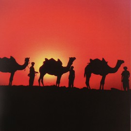 Carte postale Mick Roessler Camels at Sunset