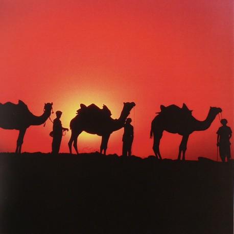 Carte postale Mick Roessler Camels at Sunset
