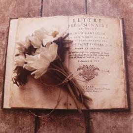 Carte d'art fleurs anciennes anemones Cristin Atria