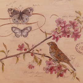Carte d'art nature's oiseaux papillons observations 2