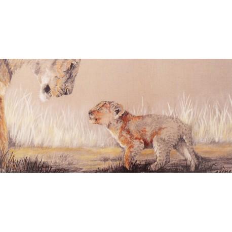 Carte postale lion bébé Florence Cadene lionceau