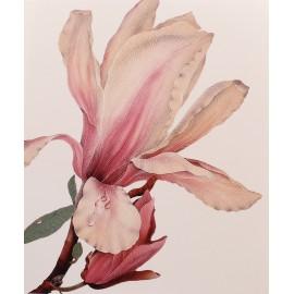 Carte postale fleurs olga makrusenko magnolia