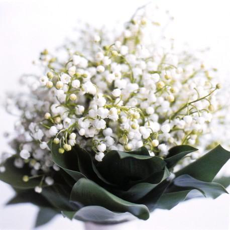 Carte postale fleurs bouquet muguet