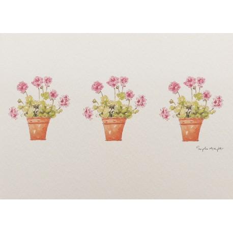 Carte postale fleurs geranium