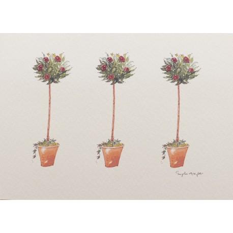 Carte postale fleurs rosier arbustif
