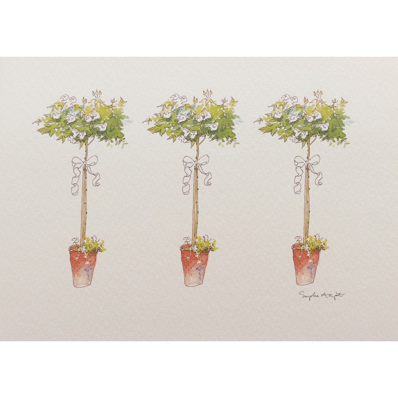 cartes postales fleurs encadrement rosier arbustif 2. Black Bedroom Furniture Sets. Home Design Ideas